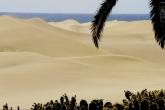 Maspalomas and the oasis